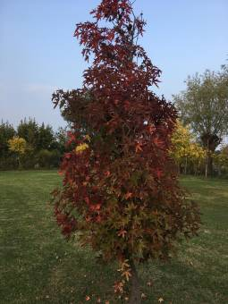 Note d autunno