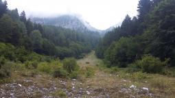 Selva Croviana
