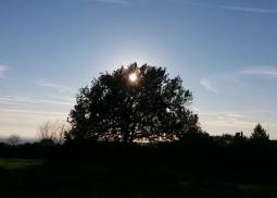 quercia con sole in controluce