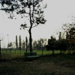 Campo rugbi