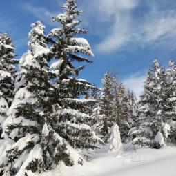Bianco come la neve