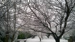 Meteo Treviso: domenica neve, poi piogge