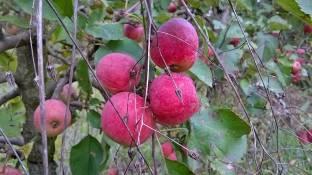 L'ultimo frutto
