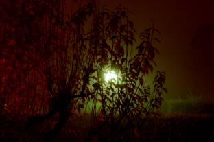 Nebbia notturna
