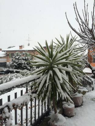 Meteo Bergamo: neve domenica, molte nubi lunedì, discreto martedì