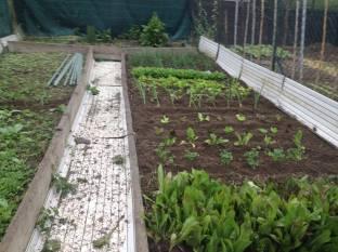 Semina E Trapianto Verdura