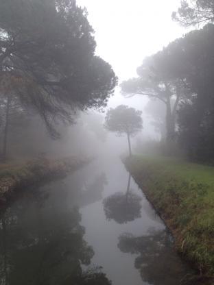 Nebbia In Pineta