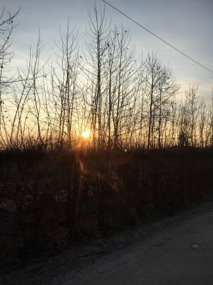 Sorge il sole sulla campagna trevigiana