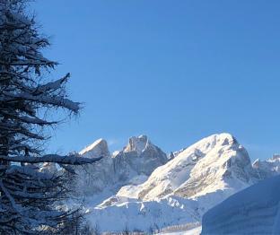 Pale di san martino versante nord da rifugio flora alpina