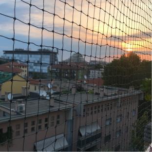Fotosegnalazione di Milano vigentino