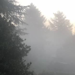 Nebbia agli irti colli