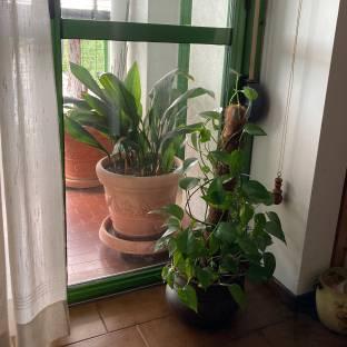 Verde dentro e fuori casa