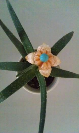 fioridiprimavera