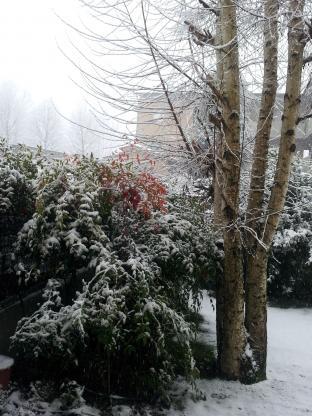 Nevicata di dicembre