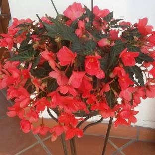 I miei fiori.......
