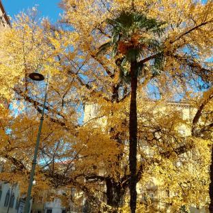Un tappeto di foglie x natale