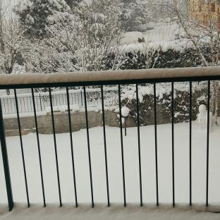 15 cm di neve