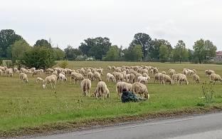 Pecorelle e pastore..