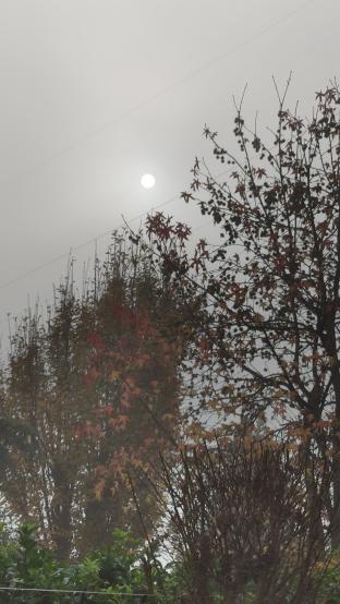 Il sole ci prova a farsi spazio nella nebbia....speru'm
