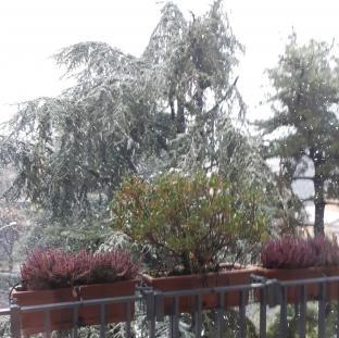 Nevicata a Monza 02.12.020
