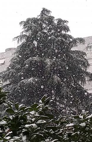 Neve dicembre 2020