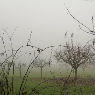 Nebbia e ancora nebbia