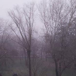 Nebbia pavese