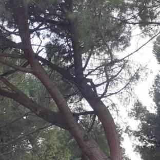 Fotosegnalazione di Pesaro