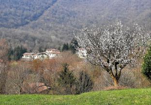 Primavera sui colli.