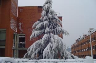 nevicata_Livorno5