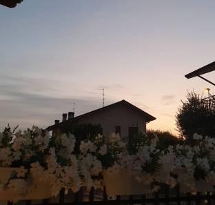 Fiori e tramonto