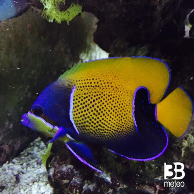 Pesce tropicale foto gallery 3b meteo for Immagini da colorare di pesci