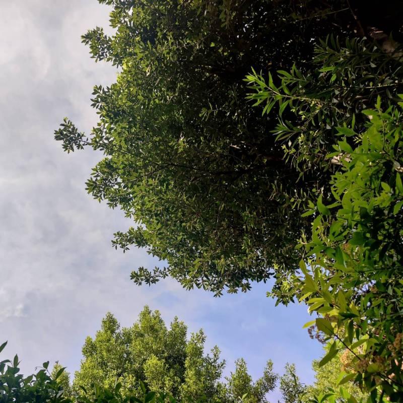 Scorci di nubi