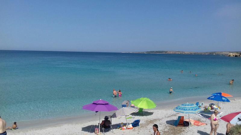 Sanea scoada spiaggia