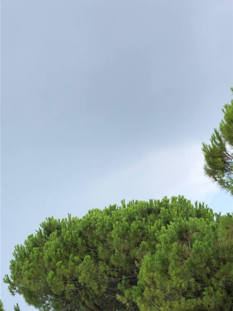 Fotosegnalazione di Lignano pineta