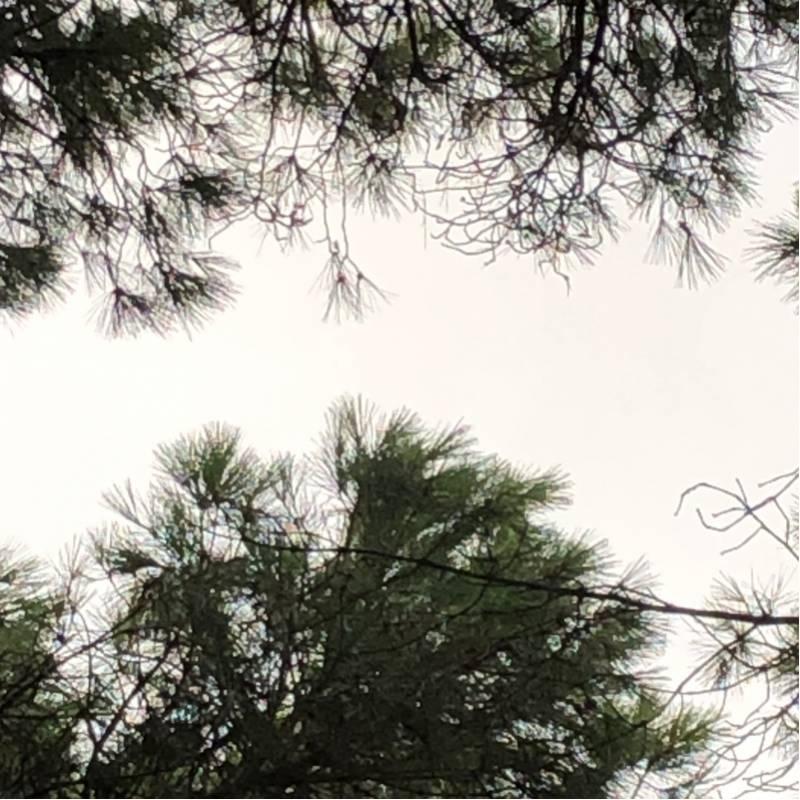 Fotosegnalazione di Arborea