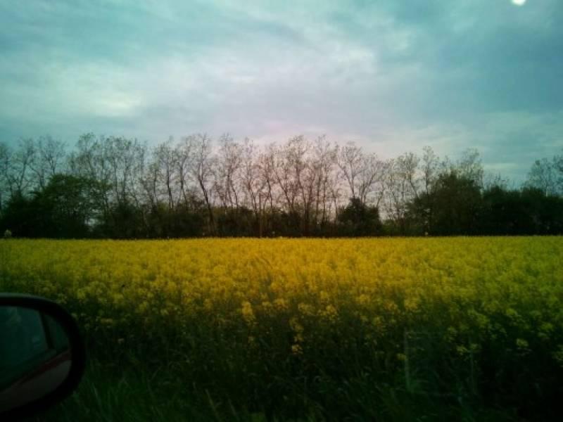 primavera nei campi