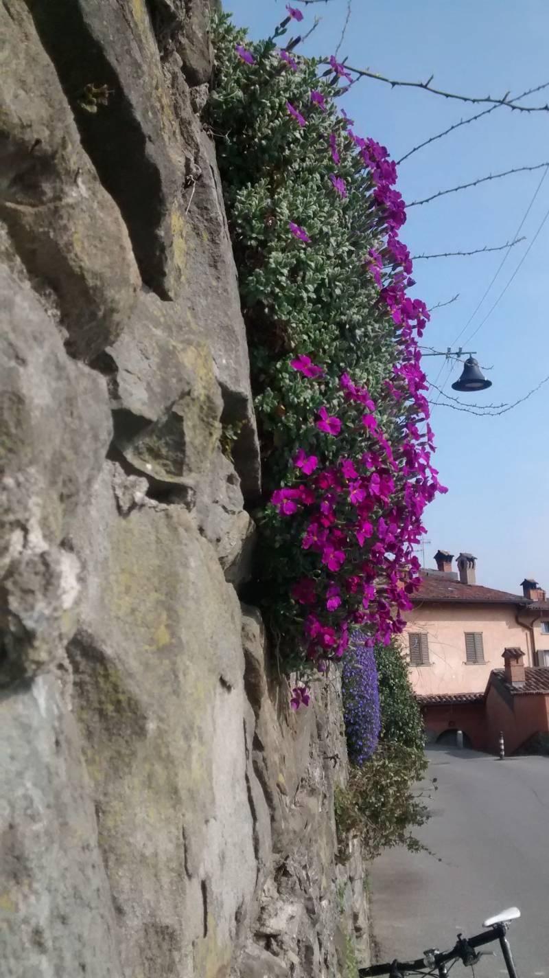 Primavera sulle mura venete