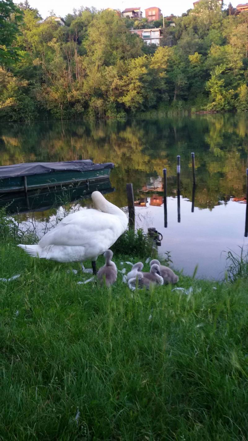 fauna sul fiume