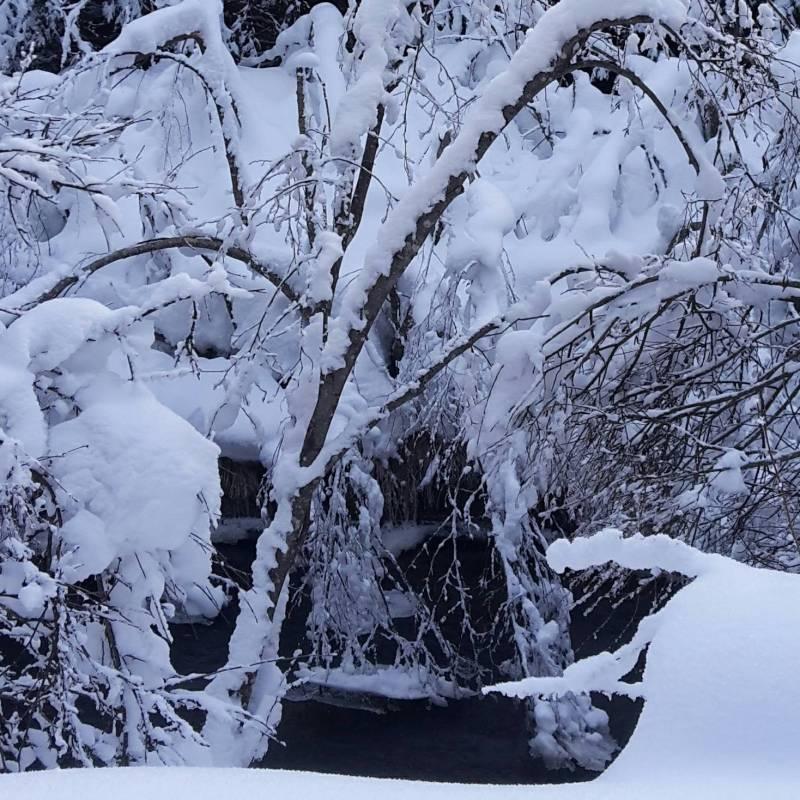 Che bella neve