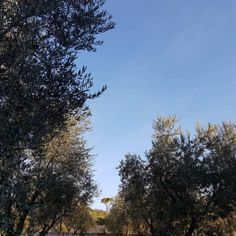 Fotosegnalazione di Isernia