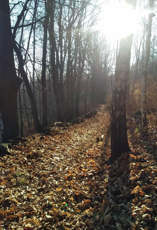 Sentiero bellavista barbato