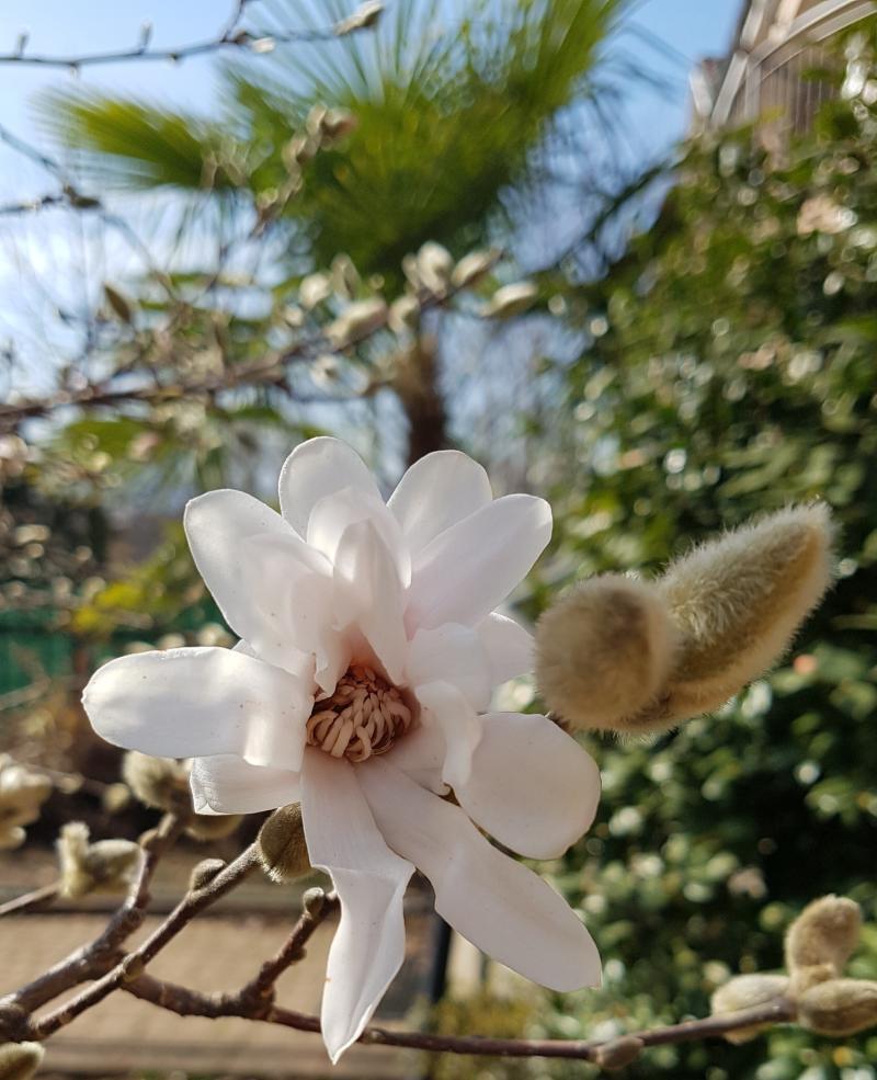 gi primavera