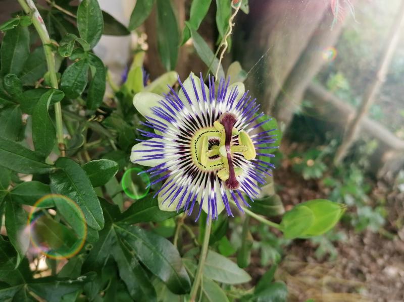 La bellezza della primavera in un fiore