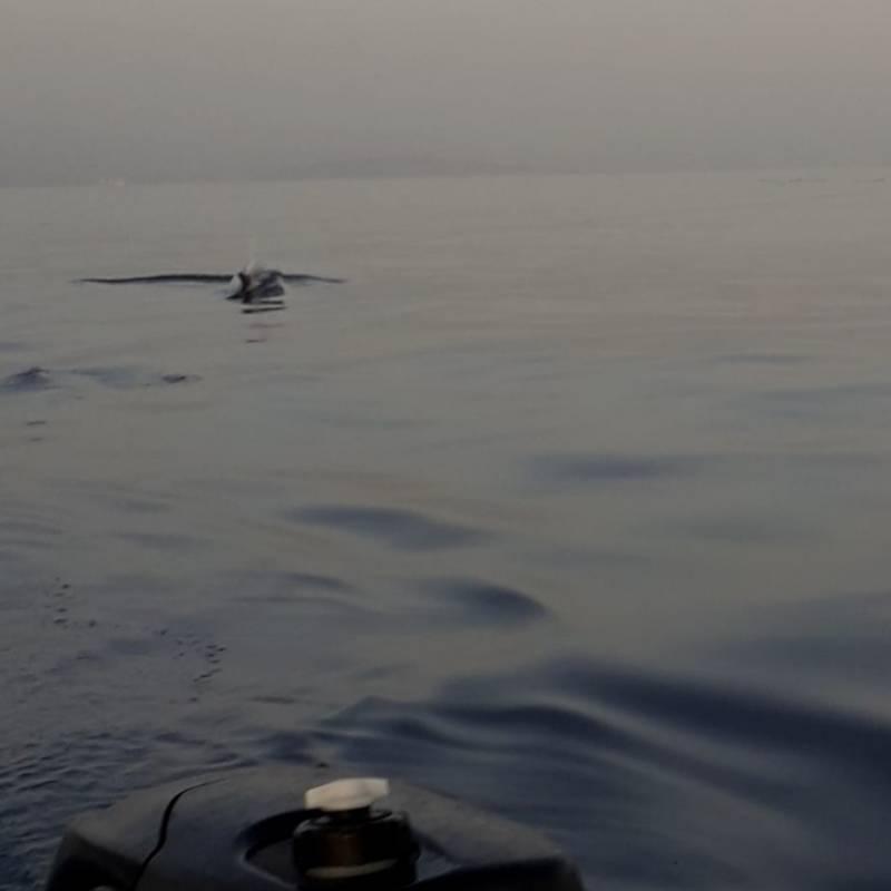 Golfo di bonagia in compagnia dei delfini