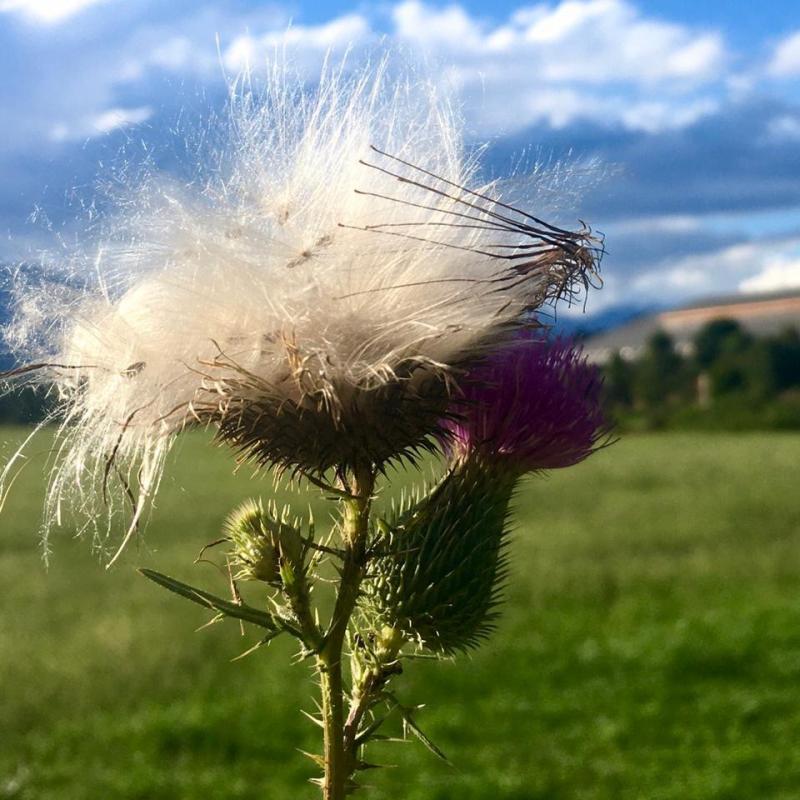 Leggero come il vento