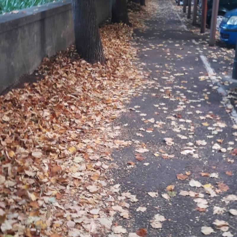 Viale d autunno