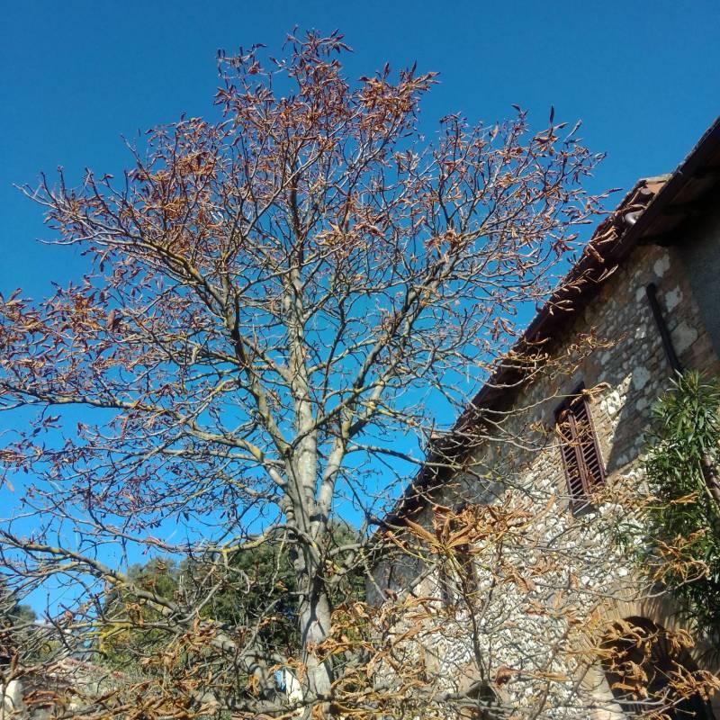 Fotosegnalazione di San gimignano