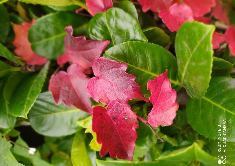 Colori d autunno