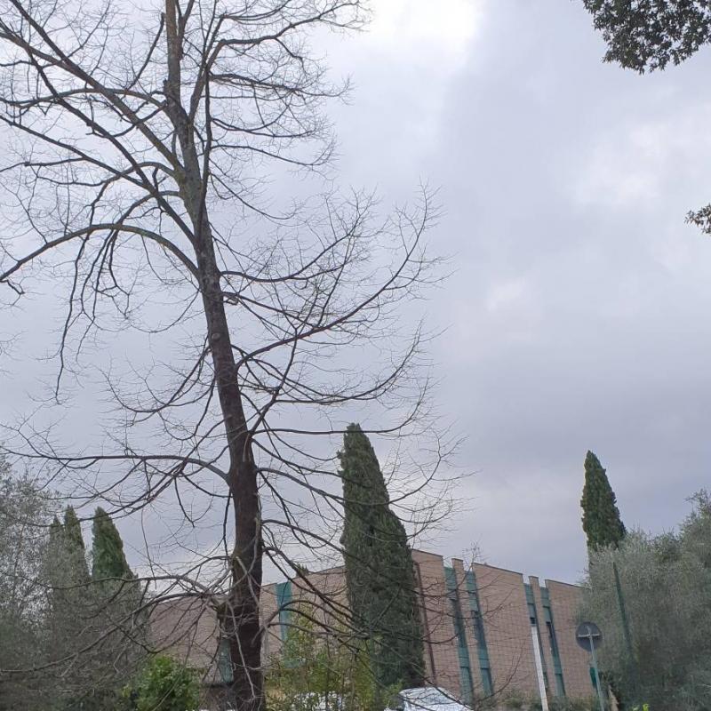 Fotosegnalazione di Arezzo